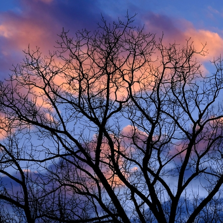 Last light in the sky as seen through a winter tree, Friday Harbor, San Juan Island | Washington